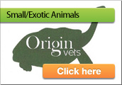 Maes Glas Vets In Barry Exotics/Small Animal Section