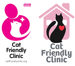 Maes Glas Vets Is A Cat Friendly Clinic In South Wales